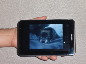 Here is a picture of a picture of Lucy taken with the Samsung Galaxy Tab 2.